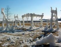 Ледяные композиции Хонгтао Жоу