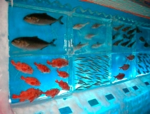 Ледяной аквариум фото-4