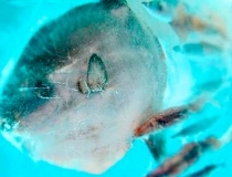 Ледяной аквариум фото-6