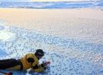 Ледяные цветы в океане фото-2