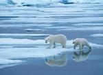 Таяние ледников -1