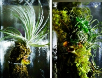 Замороженные цветы от Макото Азума фото-2