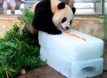 Угощение для панды на ледяном блоке-1