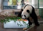 Угощение для панды на ледяном блоке -3