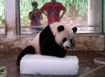 Угощение для панды на ледяном блоке -4