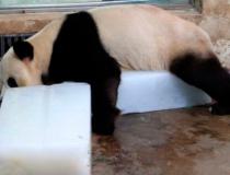 Панды любят лед -3