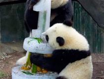 Ледяное угощение для панд - 3