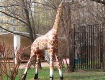 Деревянная скульптура Жираф
