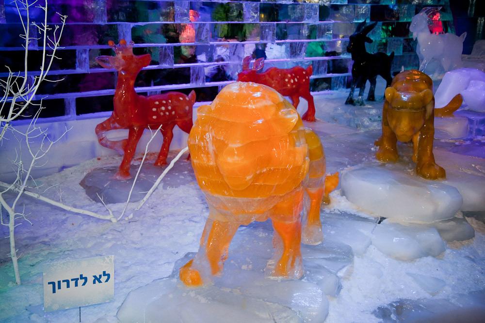 Скульптура льва из подкрашенных ледяных блоков