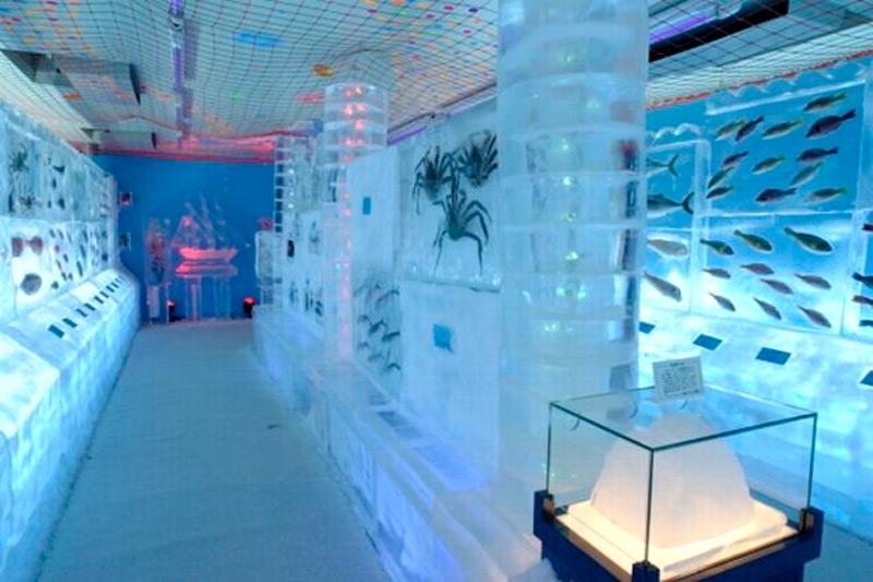 В ледяном аквариуме представлено более 450 видов морских жителей