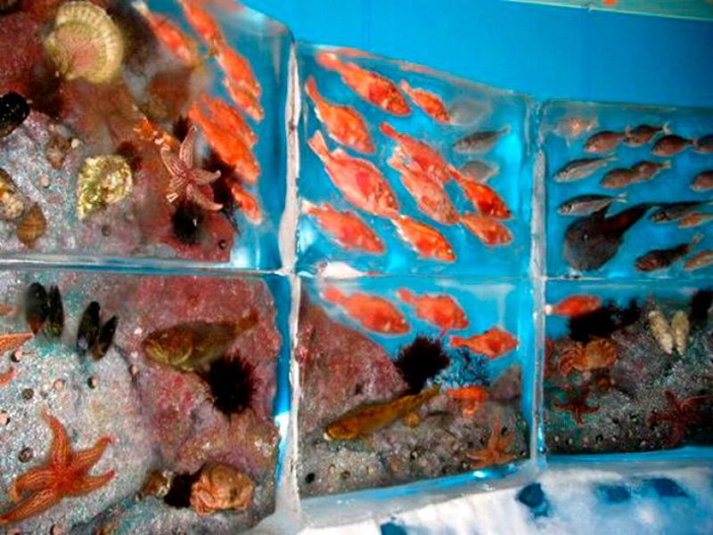 Рыбы заморожены в естественных позах и положениях
