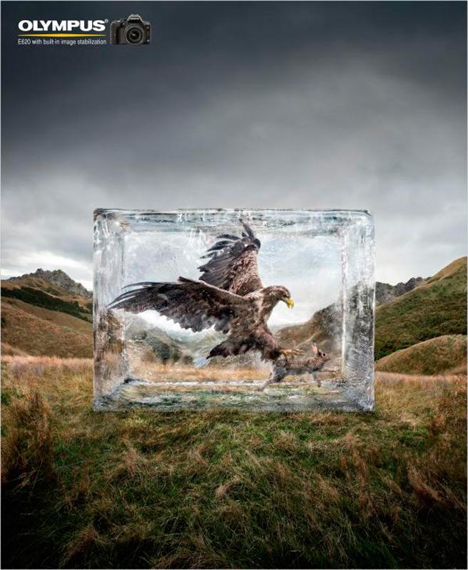 Орел в ледяном блкое