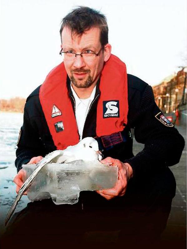 Спасатели вытащили замерзшую чайку