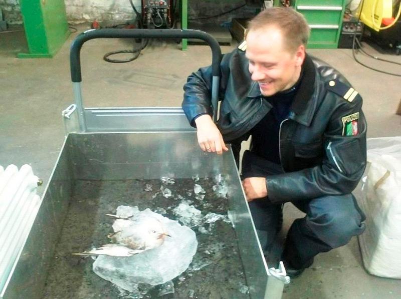 Лед растаял и чайка улетела