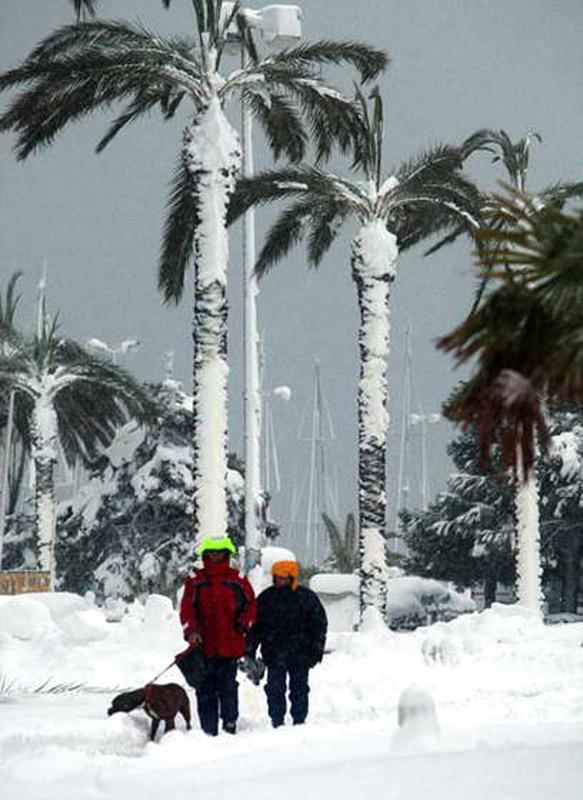 Тропический снег