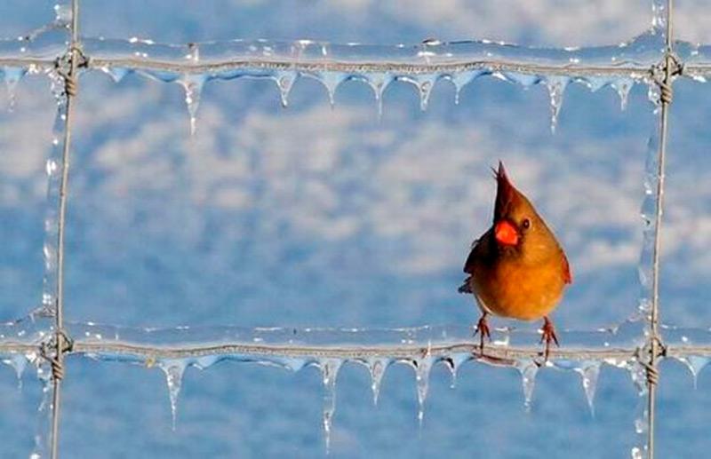 Ледяная решетка