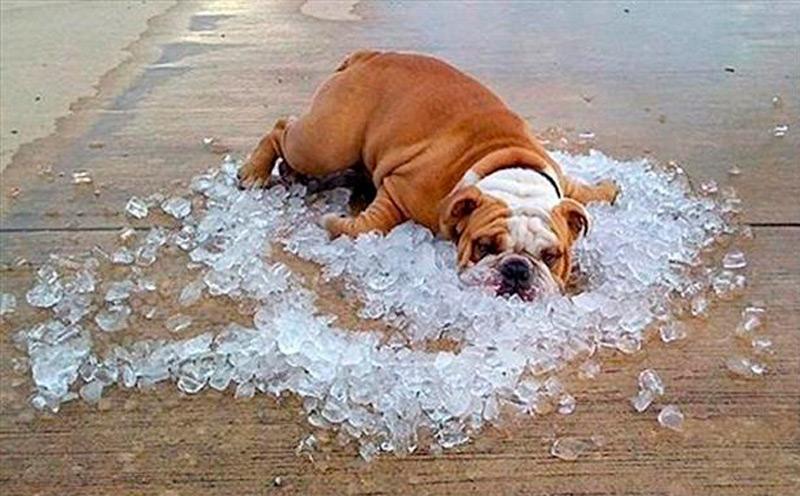 Ледяная терапия