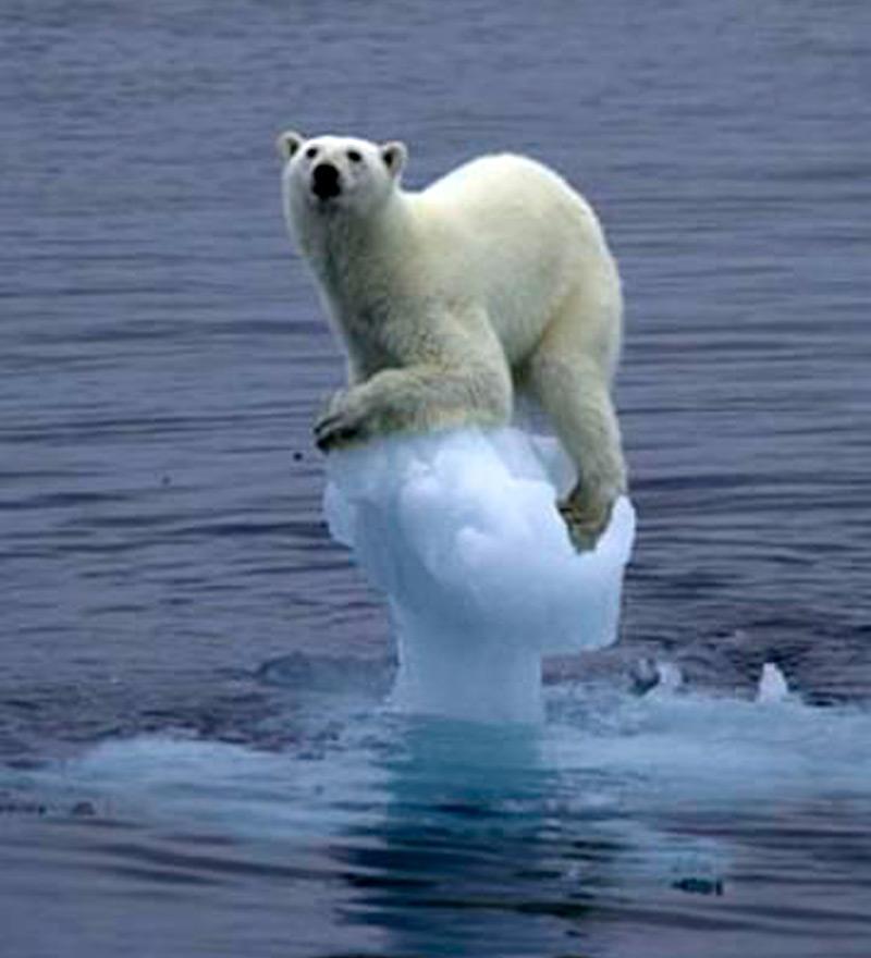 Арктический аттракцион