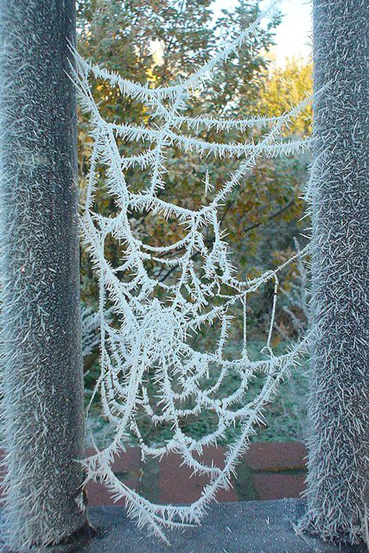 Ледяная паутина
