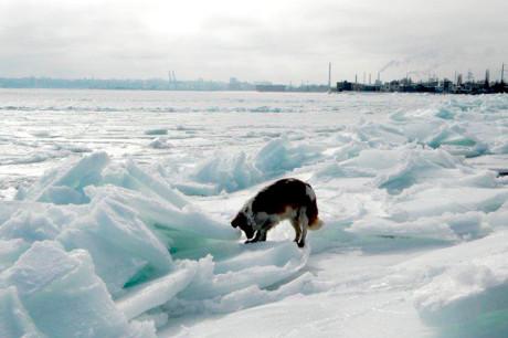 Звуки замерзшего моря
