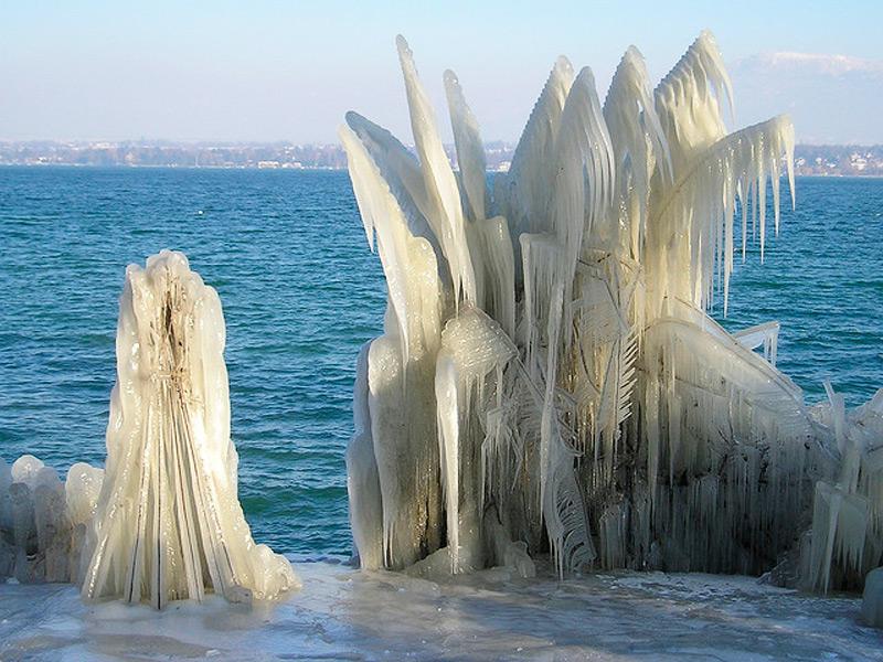 Ледяные растения зимой выглядят не хуже, чем летом