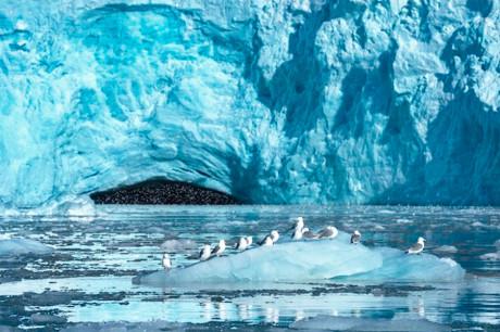 Ледник и чайки