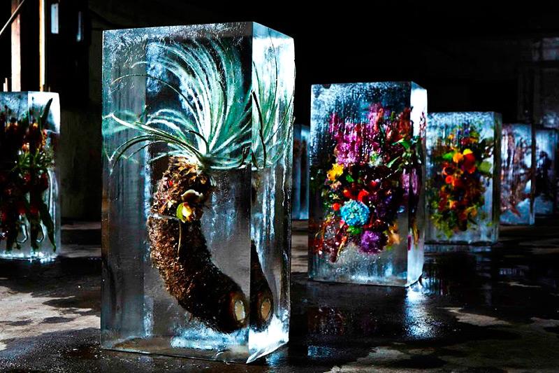 Ледяные блоки с вмороженными цветами