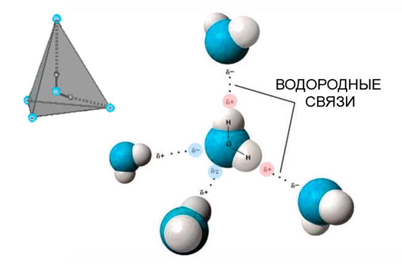 Илл.6 – Расположение зарядов в молекуле воды